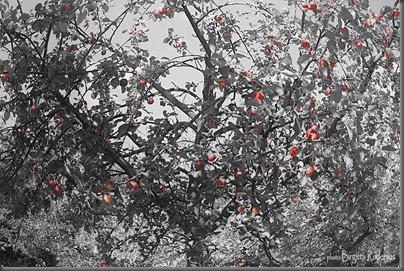 2012_290_0930_forbjudenfrukt