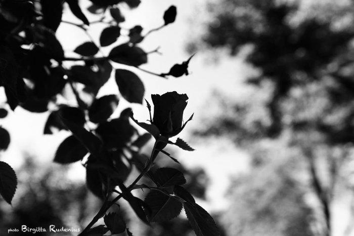 2013_168_0617_blekna