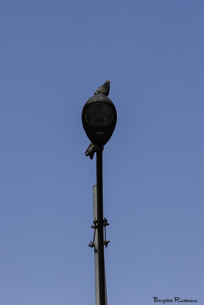 bird_20150320_doves
