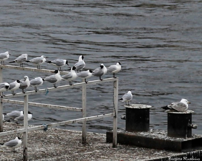 birds_20150322_sea1a