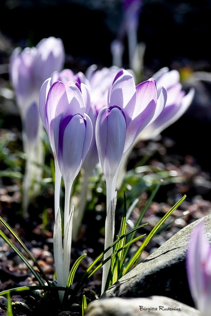 blom_20150313_ljus