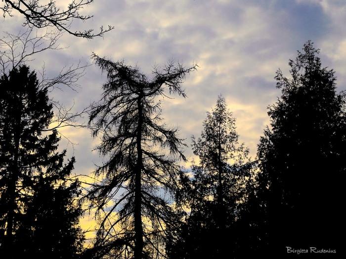 tree_20150227_tops