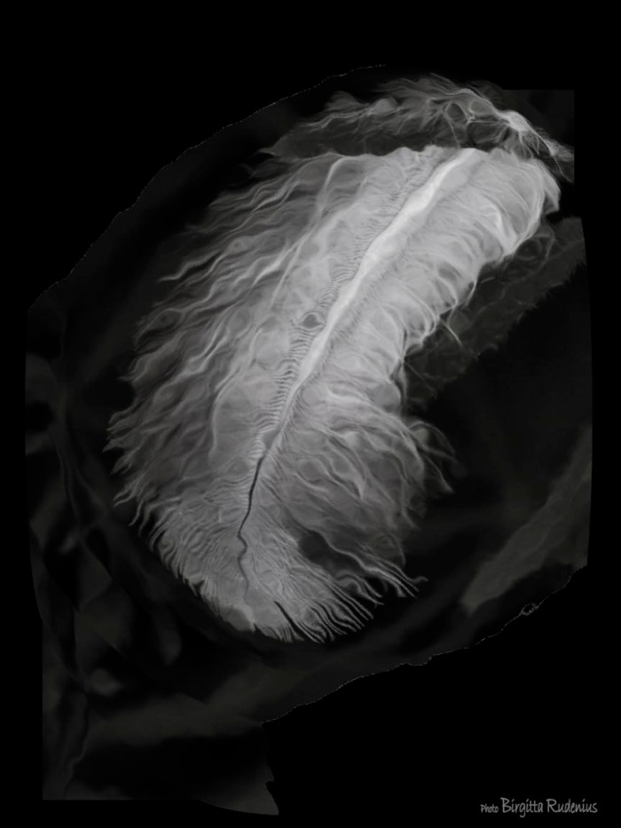 bw_20150514_pmfeather