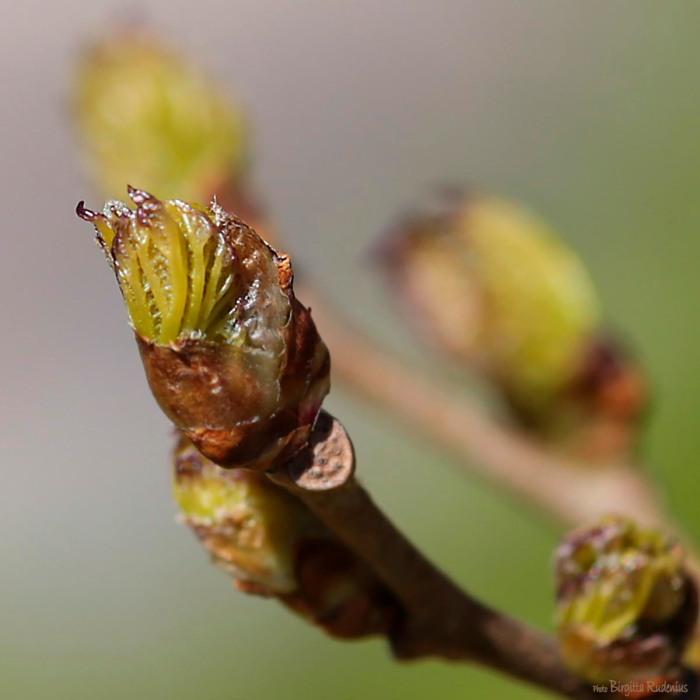 tree_20150515_spring