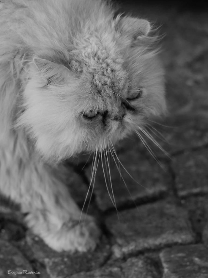 bw_20150612_cathead