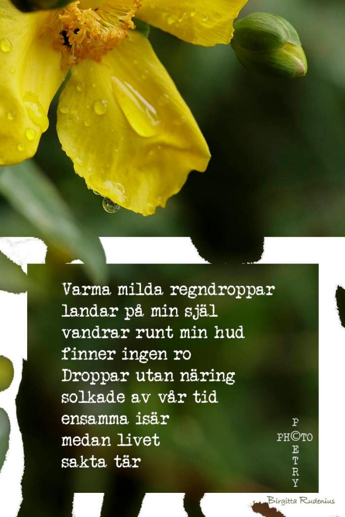 PP_20150712_raindrops