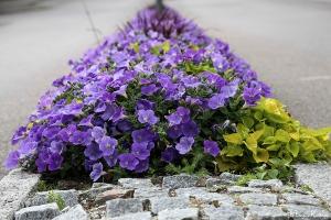 Street flowers