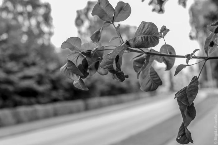 tree_20150727_syren