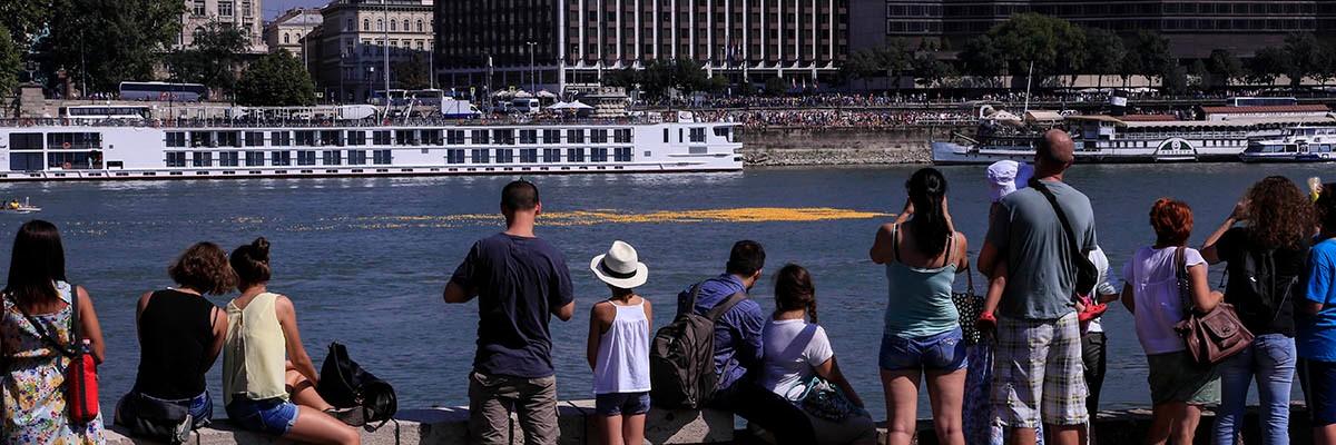 Ducks in the Danube 2015