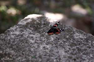 En fjärils död