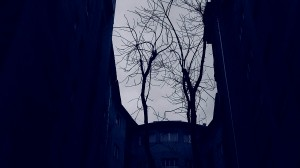 Träd mot skyn
