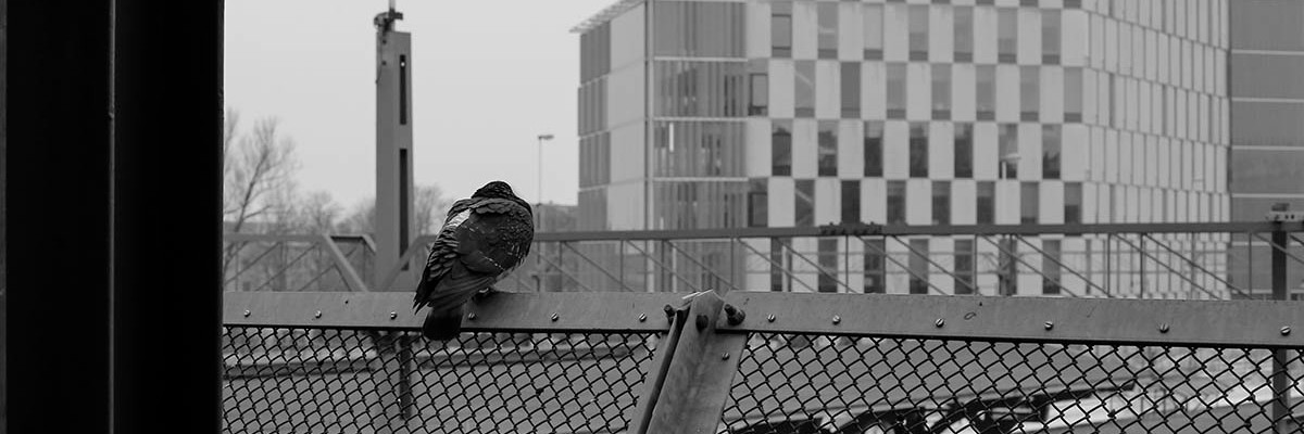 BW Dove at Lund's Train Station