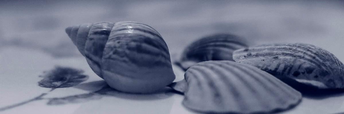 Blue Shells