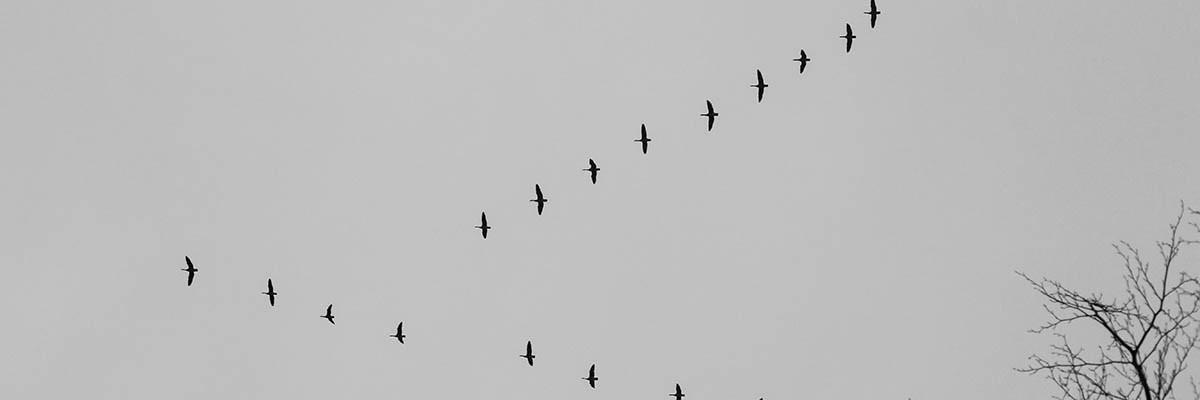 BW - Fågelstreck