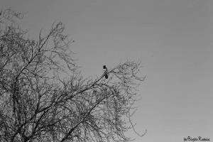 BW Crow
