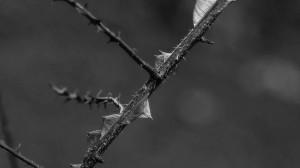 Taggar - Thorns